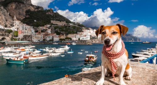 travelling with pets – tips